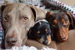 Dnes je Mezinárodní den štěňátek: Seznamte se s psími hvězdami internetu!