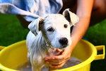 Jakého psa si vybrat? Vědci sestavili žebříček nejchytřejších plemen