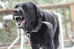 Jak reagovat, když vás pokouše pes: Na co máte nárok?