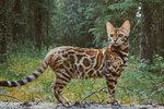 Tohle je Suki! Kočka cestovatelka!