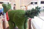 Vánoční stromeček?