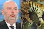 Konec kontaktních ZOO a mazlících koutků: Ministr si došlápne po masakru tygrů na chovatele