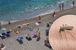 Smrtící komáři se rozmohli v Itálii, Řecku i Chorvatsku. Čeští turisté v ohrožení?