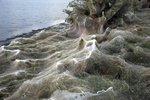 Pavučina pohltila pobřeží v dovolenkovém ráji: Měří neuvěřitelných 300 metrů