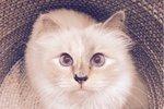 Karl svou kočku miloval.