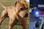 """Těhotnou ženu rozsápala v lese smečka psů! Policie testuje 93 """"podezřelých"""" zvířat"""