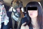 """Těhotnou ženu (†29) rozsápala v lese smečka psů! Policie testuje 93 """"podezřelých"""" zvířat"""