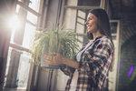 """Pokojové rostliny jsou vsoučasnosti jedním znejžhavějších trendů, pokud jde o bytový design. Nejenže dodají vaší domácnosti nádech přírody, ale taky bude váš byt vypadat útulněji. Ať už jste nováček, který ještě žádnou květinu doma neměl, nebo jste už dostatečně """"zelení a ostřílení"""" zahradníci, ve výběru rostliny by vám mohlo napovědět znamení zvěrokruhu."""