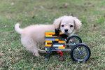 Gracie a její lego vozík