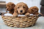 Nejoblíbenější jména pro psa: Vedou Max a Bety. Podívejte se na celou top 20