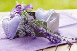 Drobné kvítky levandule provoní vaši zahradu i byt, navíc z ní můžete udělat voňavé polštářky, mýdlo a poslouží i v kuchyni