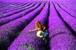 Ve Francii se levandule pěstuje ve velkém, vám ale pro radost určitě postačí i jeden dva keříky.