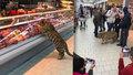 Tygřice se procházela po potravinách a zákazníci byli unešení.