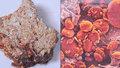 Škrobová zrna z válečného chleba z roku 1917 pod elektronovým mikroskopem.