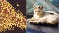Britský turista zemřel na vzteklinu - pokousala ho toulavá kočka.