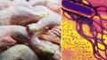 Rozvážkový prodej drůbežího obsahoval salmonelu. (ilustrační foto)