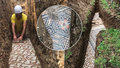 V Itálii objevili dlažbu z dob starověkého Říma. Dokonale zachovaná mozaika archeology překvapila.