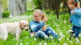 Jak ochránit psy a kočky před letním nebezpečím? Hrozí jim přehřátí, paraziti i otrava