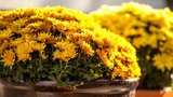 Do sarkofágu z antického Říma zasadili kytky: Náhodou si toho všiml starožitník