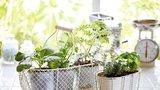 Bylinky, které krásně voní a prospívají našemu zdraví? Vyzkoušejte hřebíček, oregano nebo tymián!