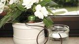 Jak zabezpečit pokojové květiny před odjezdem na letní dovolenou