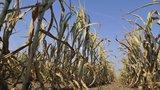 V období sucha nám zdraží voda. Vláda schválila plán za miliardy