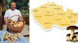 Houbařská mapa republiky: Kde rostou nejvíce? Na Karlovarsku a Zlínsku!