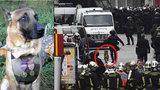 Poslední foto psí hrdinky Diesel. #JeSuisChien truchlí svět pro fenku, kterou odpálila teroristka