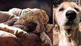 """Záchranáři našli """"zkamenělou"""" fenku a vrátili jí život"""