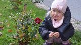 Je advent a kvetou kytky. Teplotní rekordy hlásí 21 míst v Česku
