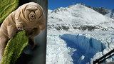 Obrovský úspěch vědců: Živé organismy přežily 30 let u ledu v -20 °C!