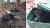 Lidský hyenismus: Policista v Praze našel osm štěňat v kufrech a igelitce!