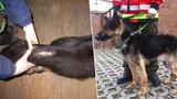 Utýral psa málem k smrti a nikdo si toho nevšiml: Policisté chytili