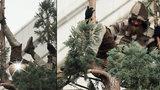 Magor vystrkoval zadek na 25metrovém stromě, po dni slezl dolů