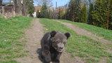 Slavná zvířecí rodina se rozrostla: Medvídek Kuba už má skoro 10 kilo