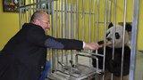 Ředitel pražské zoo Miroslav Bobek navazuje kontakty v Číně: Vyhlíží pandy pro Prahu?