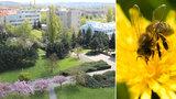 60 tisíc včel na střeše hotelu ve Vysočanech: Med budou snídat hoteloví hosté