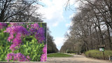 Oboru Hvězda zaplaví květiny: Zahradníci tu vysadí 2790 trvalek a 8093 cibulovin