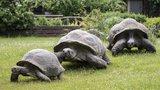 """Den se želvami v Zoo Praha: Chystají se přednášky i představení """"želví školky"""""""