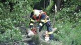 Bouřky pustošily Česko: Táborníka zranil padající strom, lidé jsou bez elektřiny