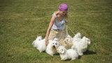 V Modřanech se otevře nové psí hřiště: Malí a velcí mazlíčci si spolu hrát ale nebudou