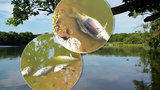 Prázdniny hrůzy: Kemp zamořil puch, dovolenkáři plavou mezi rybími mrtvolami