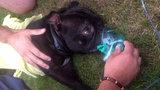V hořícím bytě na Zličíně zůstal uvězněný pes: Mazlíčkovi dali první pomoc záchranáři!