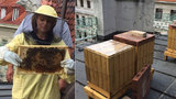 """Primátorka Krnáčová vyrobila """"metropolitní"""" med. Včely žijí v úlech na střeše magistrátu"""