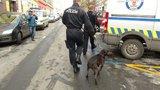 Tragická smrt dítěte na Hradecku: Pětiletého chlapce napadl pes