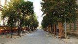 Více zeleně na Vinohradech či Albertově: V ulicích se zaskví 76 nových stromů