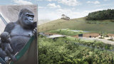 Zoo Praha bojuje o nový pavilon goril: Ten starý lidoopy neochrání před povodní