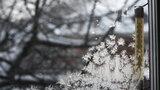 """Květen bude """"brrr"""". Studené až mrazivé noci budou střídat chladné a deštivé dny"""