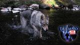 Vlk se vrací ze záhrobí: Každou noc mu musím svítit, jinak Qeron v noci štěká. Bál se tmy...