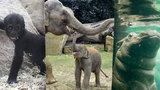Babyboom v Zoo Praha: Rozmnožilo se 223 zvířecích druhů, letos mají už 1191 mláďat
